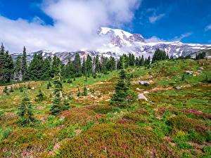 Фото Штаты Парк Гора Вашингтон Дерево Облака Mount Rainier National Park Природа