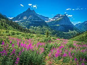 Картинка США Парк Горы Пейзаж Glacier National Park, Montana