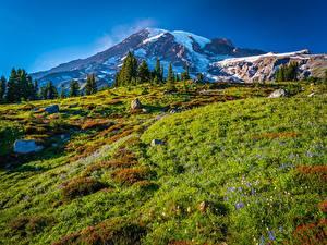 Фото США Парк Горы Пейзаж Камень Вашингтон Mount Rainier National Park