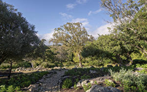 Картинка Штаты Парк Деревьев Тропа Prehistoric Garden Oregon Природа