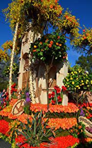 Фотографии Америка Парк Розы Калифорнии Дизайна Rose Parade Pasadena