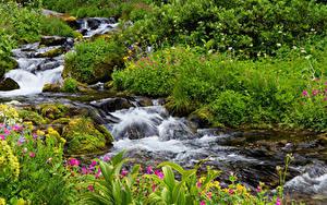 Картинка США Парки Водопады Ручей Маунт-Рейнир парк Природа