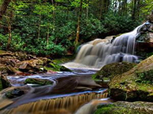 Картинка США Парки Водопады Камни Деревья Мох Ручей Elakala Falls Blackwater Falls State park Природа
