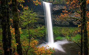 Фотография США Парки Водопады Осенние Утес Ствол дерева Мох Silver Falls State Park Oregon