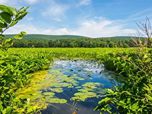 Фото Америка Пруд Водяные лилии Mamakating Природа