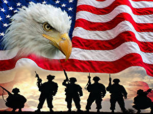 Фотография Штаты Солдаты Птицы Флага Клюв Силуэт Белоголовый орлан Армия