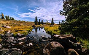 Фотография Америка Камень Ручей Деревьев Mammoth Creek