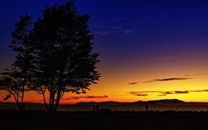 Фотография Штаты Рассвет и закат Калифорния Силуэта Дерево Emeryville, Alameda County Природа