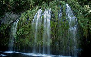 Фото США Водопады Калифорния Утес Мох Mossbrae falls Природа
