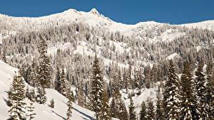 Фотография Штаты Зима Парк Калифорнии Дерева Ели Снег Lassen Volcanic National Park Природа