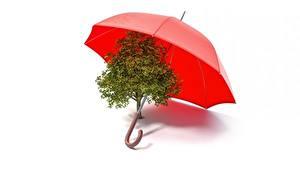 Фотографии Зонт Деревья Белый фон 3D Графика