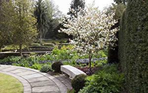 Картинка Великобритания Сады Цветущие деревья Дерева Скамейка York Gate Garden Leeds Природа