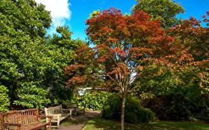Картинки Великобритания Парки Скамья Деревья Кусты Уэльс Swansea Botanic Gardens Природа