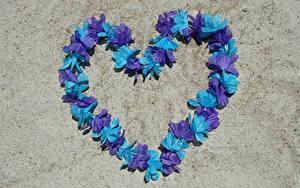 Картинки День всех влюблённых Сердечко Дизайн Лепестки Цветы