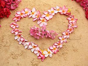 Фотографии День святого Валентина Плюмерия Сердце Цветы