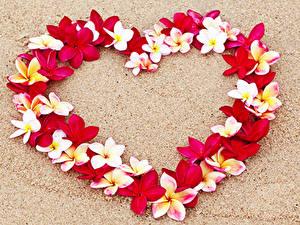 Картинка День всех влюблённых Плюмерия Сердечко Дизайн Песок Цветы
