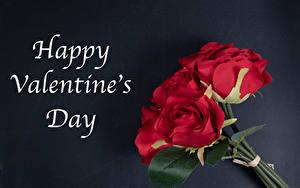 Фотография День всех влюблённых Роза Букет Сером фоне Английская Слова Красная