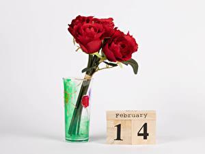 Обои День всех влюблённых Роза Сером фоне Английская Слова Красная Вазе цветок
