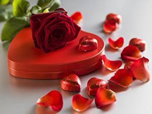 Картинка День всех влюблённых Розы Сердце Лепестки Цветы