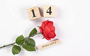 Фотография День всех влюблённых Роза Белом фоне Английская Слова Красная