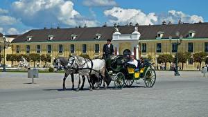 Фото Вена Австрия Лошади Городской площади Дворца Schönbrunn