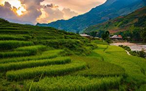 Фотография Вьетнам Гора Поля Облачно Sapa