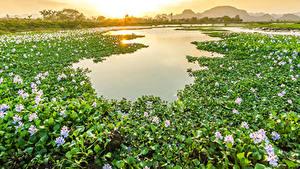 Картинка Вьетнам Водяные лилии Пруд Рассветы и закаты Много Цветы