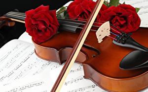 Картинка Скрипки Роза Ноты Красная Три Цветы