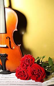 Фото Скрипки Роза Ноты Три Красные цветок