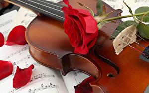 Обои Скрипки Розы Лепестки