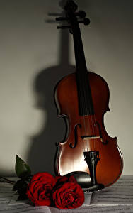 Фотографии Скрипка Роза Бордовый Музыка
