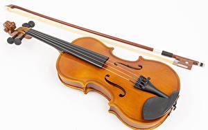 Обои для рабочего стола Скрипки Белым фоном Музыка