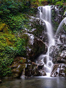 Фотографии Водопады Утес Ветвь Мха Природа