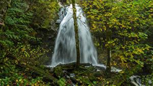 Картинки Водопады Утес Ствол дерева Мох Природа