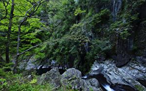 Обои Водопады Леса Скала Деревья Ручей Природа