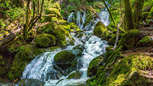 Картинка Водопады Леса Мох Ручей Природа