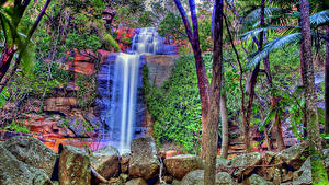 Фотографии Водопады Камень Ствол дерева HDR Ручей Природа