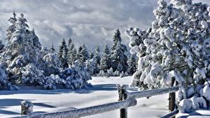 Фотографии Зима Ограда Снег Ель Природа