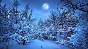Фотография Зимние Леса Вечер Снег Луны На ветке Природа