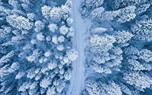 Фотография Зимние Лес Дороги Сверху Снега Дерево Природа
