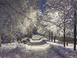 Фотографии Зимние Парки Аллея Снегу Деревьев В ночи Уличные фонари Природа