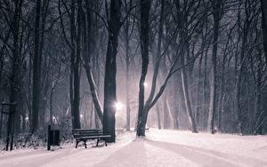Обои Зима Парк Снегу В ночи Деревья Скамья Природа
