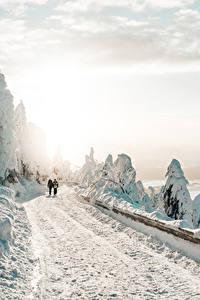 Фото Зимние Дороги Снег 2 Ходьба Деревья