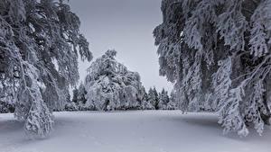 Картинки Зимние Снег Ель Ветвь