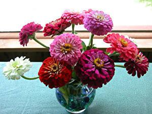 Фото Майоры Вазы Разноцветные цветок