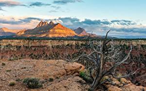 Картинка Зайон национальнай парк Штаты Гора Utah