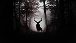 Фотография Олени Рога Силуэта Животные