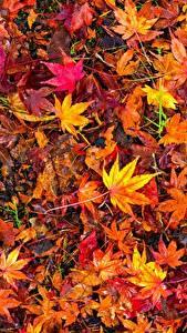 Фото Много Осенние Листва Разноцветные Природа