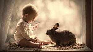 Фотографии Кролики Младенец Окно Сидя Дети