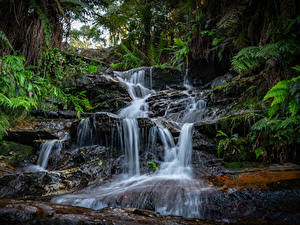 Фотография Водопады Скала Мох